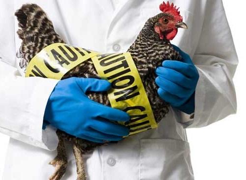 با H5N1 علمی تر رفتار کنیم
